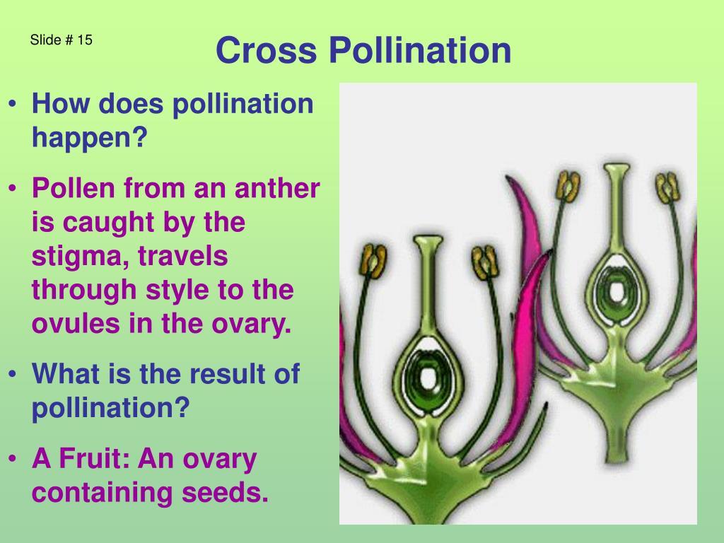 Cross Pollination