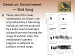 genes vs environment bird song