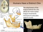 humans have a distinct chin