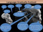 language gradually evolved