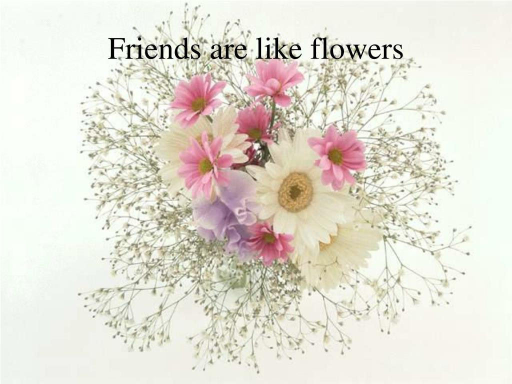 friends are like flowers l.