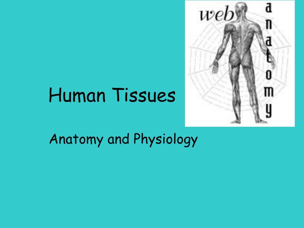 human tissues l.