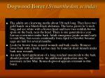 dogwood borer synanthedon scitula