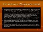 fall webworm hyphantria cunea