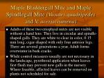maple bladdergall mite and maple spindlegall mite vasates quadripedes and v aceriscrumena