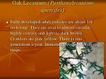 oak lecanium parthenolecanium quercifex