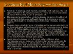 southern red mite oligonychus ilicis