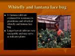 whitefly and lantana lace bug
