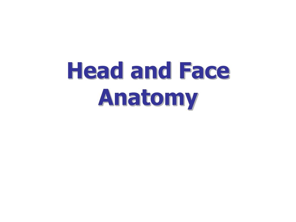 head and face anatomy l.