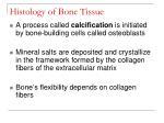 histology of bone tissue12