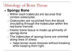 histology of bone tissue23