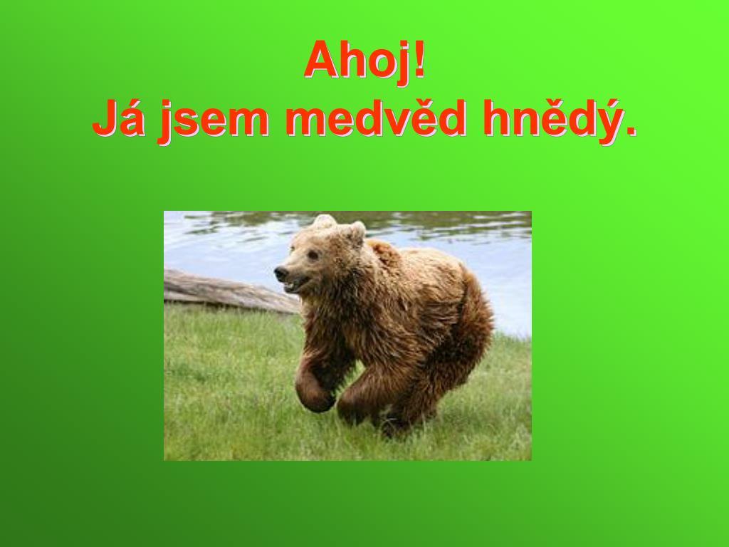 ahoj j jsem medv d hn d l.