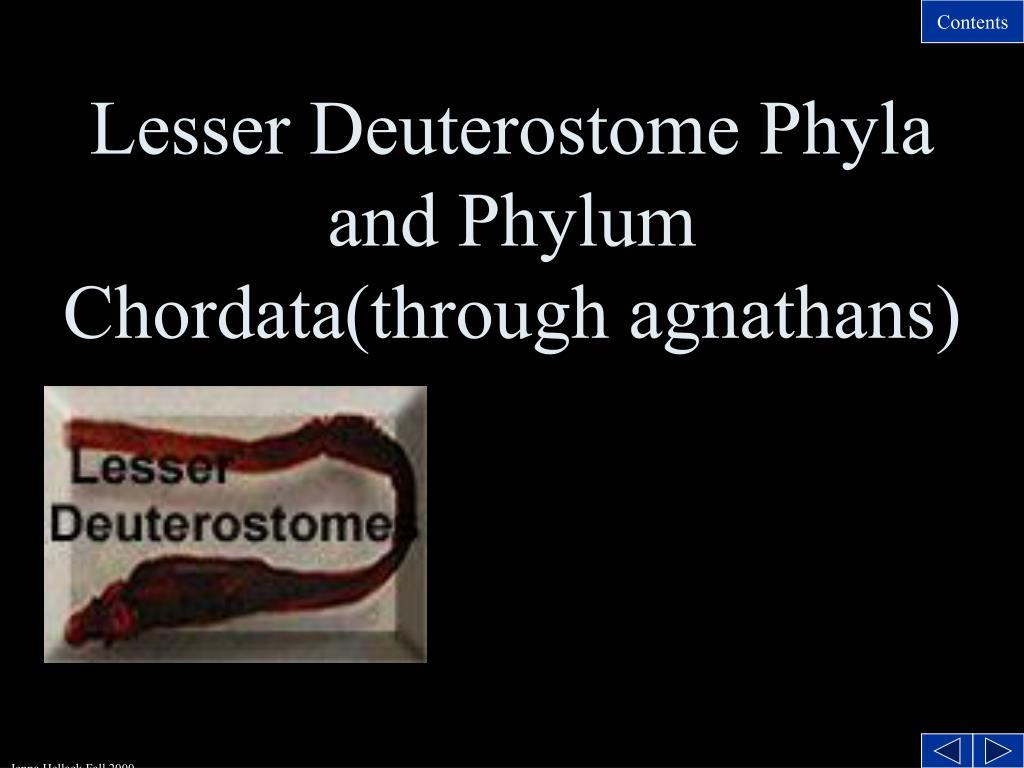 lesser deuterostome phyla and phylum chordata through agnathans l.