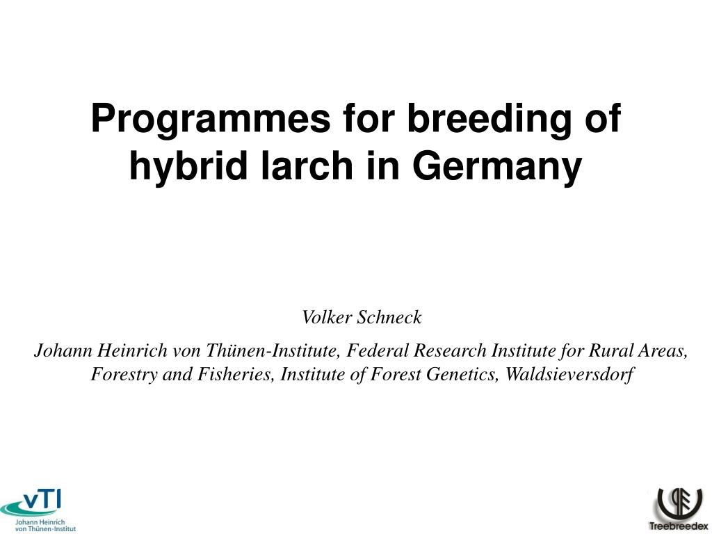 programmes for breeding of hybrid larch in germany l.