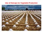 use of hotcaps for vegetable production