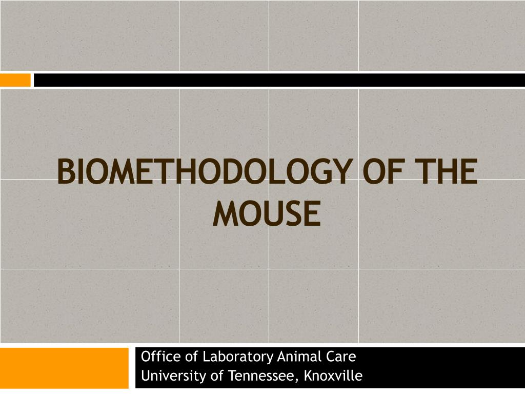 biomethodology of the mouse l.