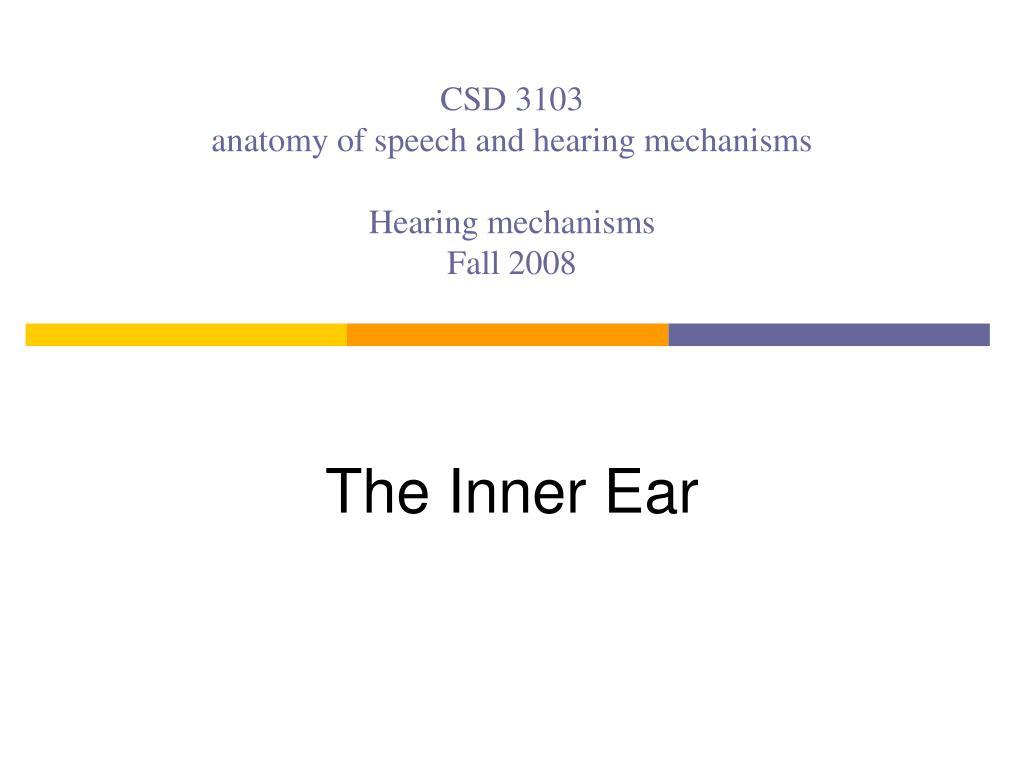 csd 3103 anatomy of speech and hearing mechanisms hearing mechanisms fall 2008 l.