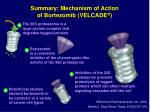 summary mechanism of action of bortezomib velcade