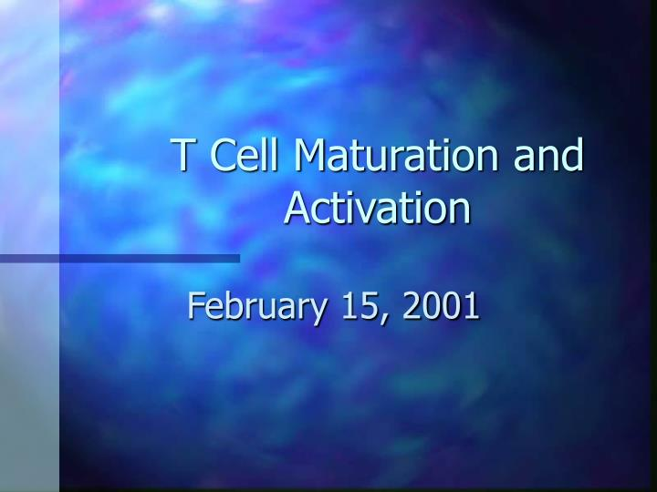 T cell maturation and activation