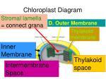 chloroplast diagram28