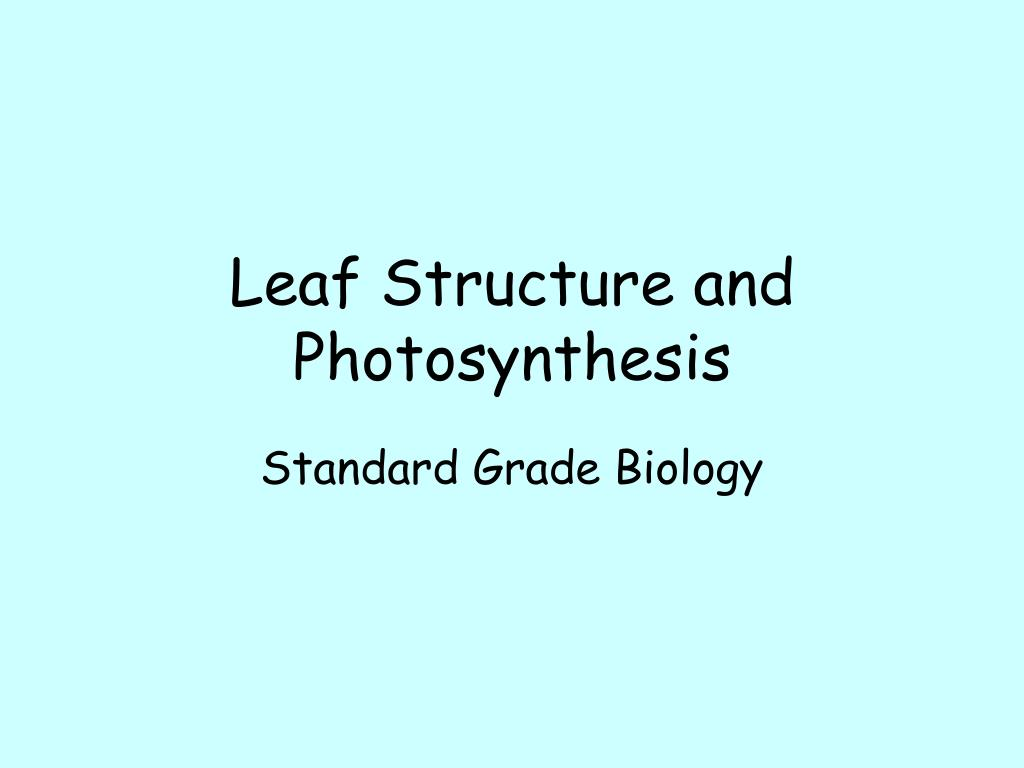 leaf structure and photosynthesis l.