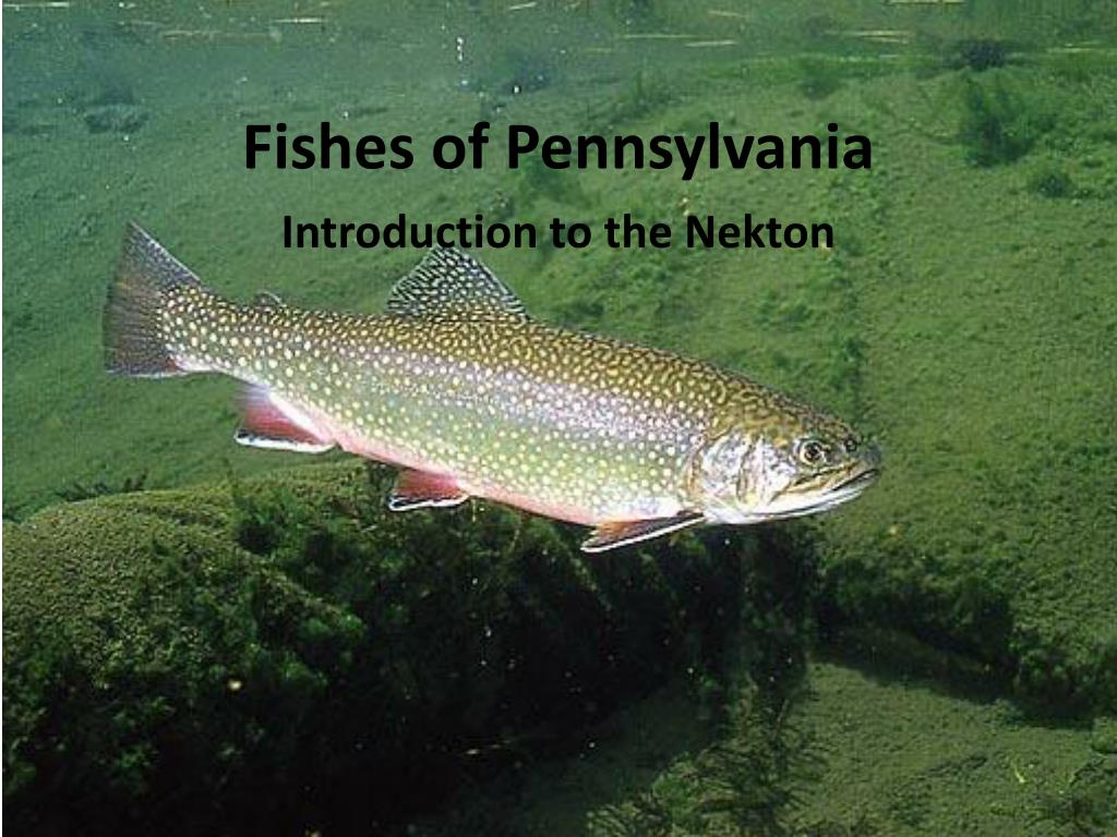 fishes of pennsylvania l.
