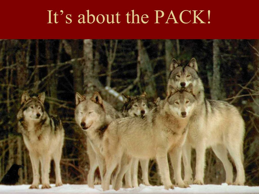 It's about the PACK!