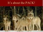 it s about the pack
