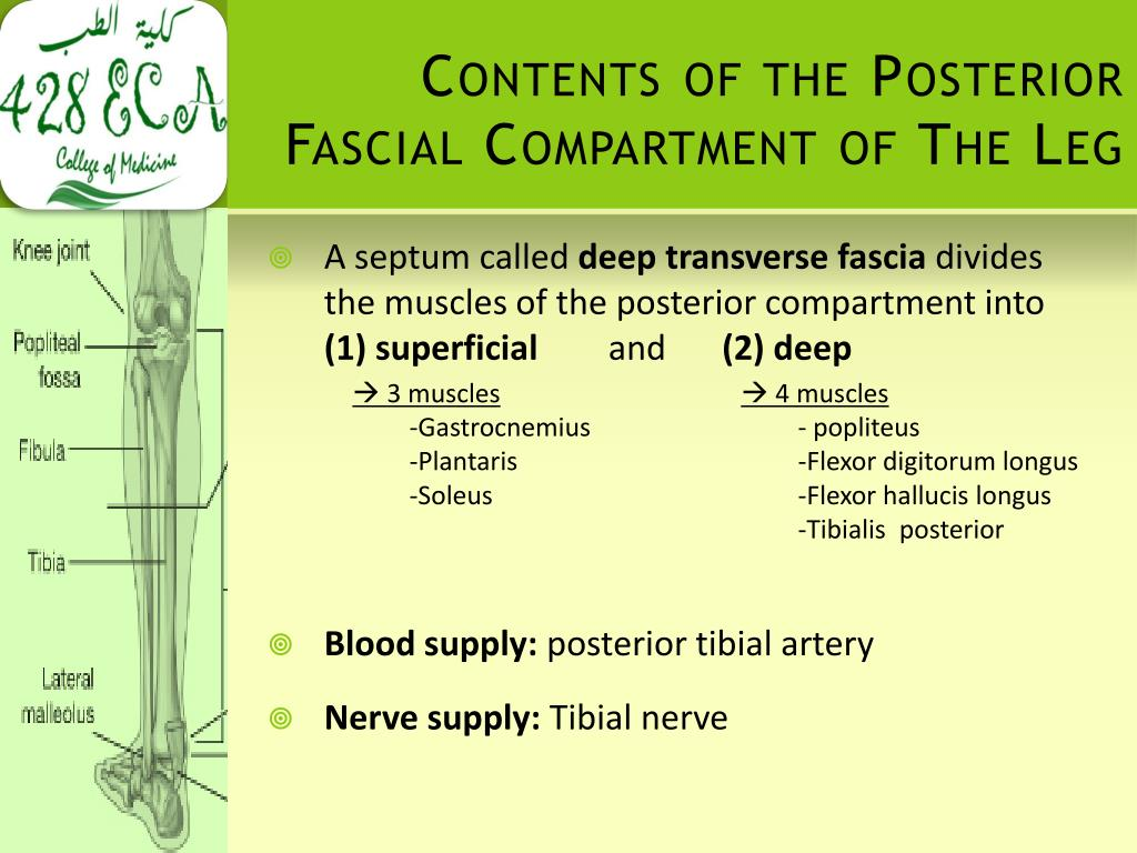 Contents of the Posterior