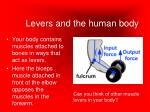 levers and the human body