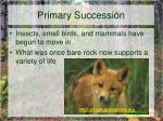 primary succession10