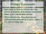 primary succession5