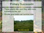 primary succession9