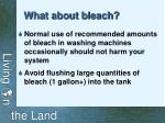 what about bleach