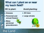what can i plant on or near my leach field