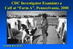 cdc investigator examines a calf at farm a pennsylvania 2000