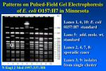 patterns on pulsed field gel electrophoresis of e coli o157 h7 in minnesota
