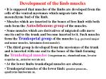 development of the limb muscles