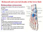 retinaculi and synovial sheaths of the lower limb