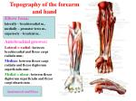 topography of the forearm and hand
