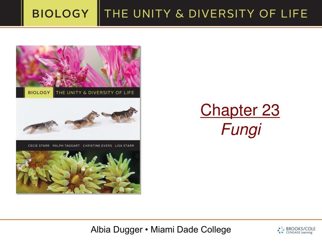 chapter 23 fungi l.