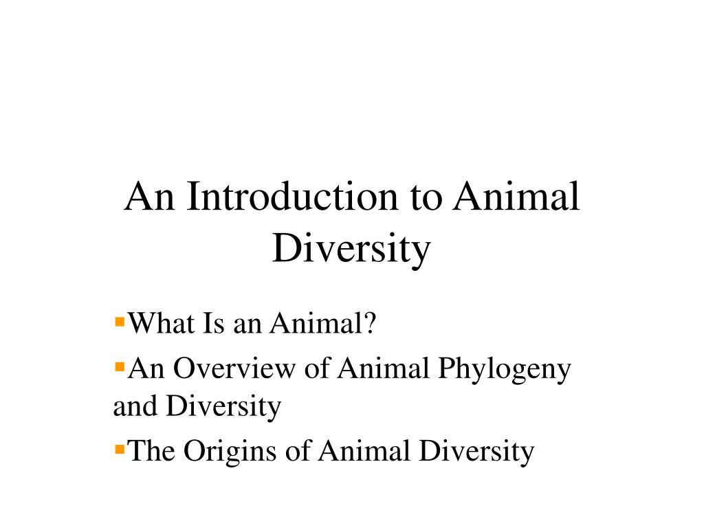 an introduction to animal diversity l.