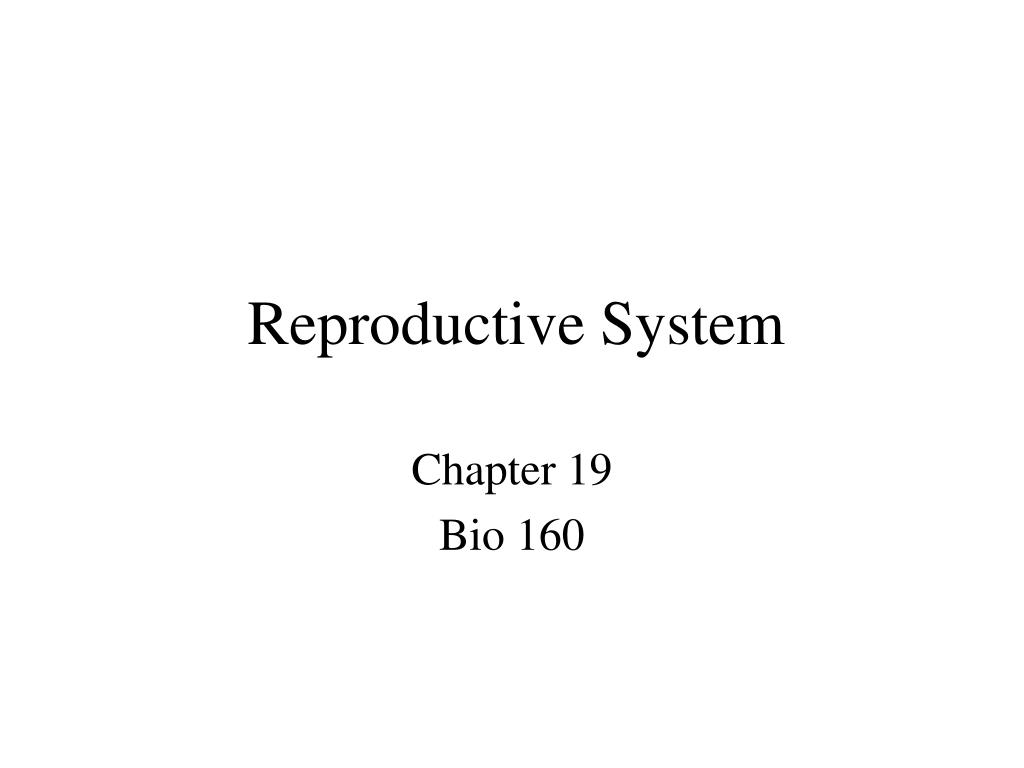 reproductive system l.