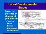 larval developmental stages