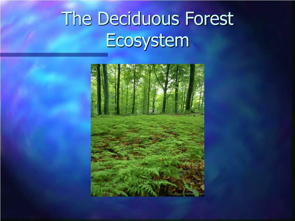 The Deciduous Forest Ecosystem