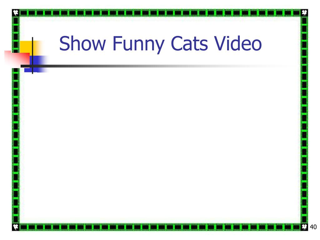 Show Funny Cats Video