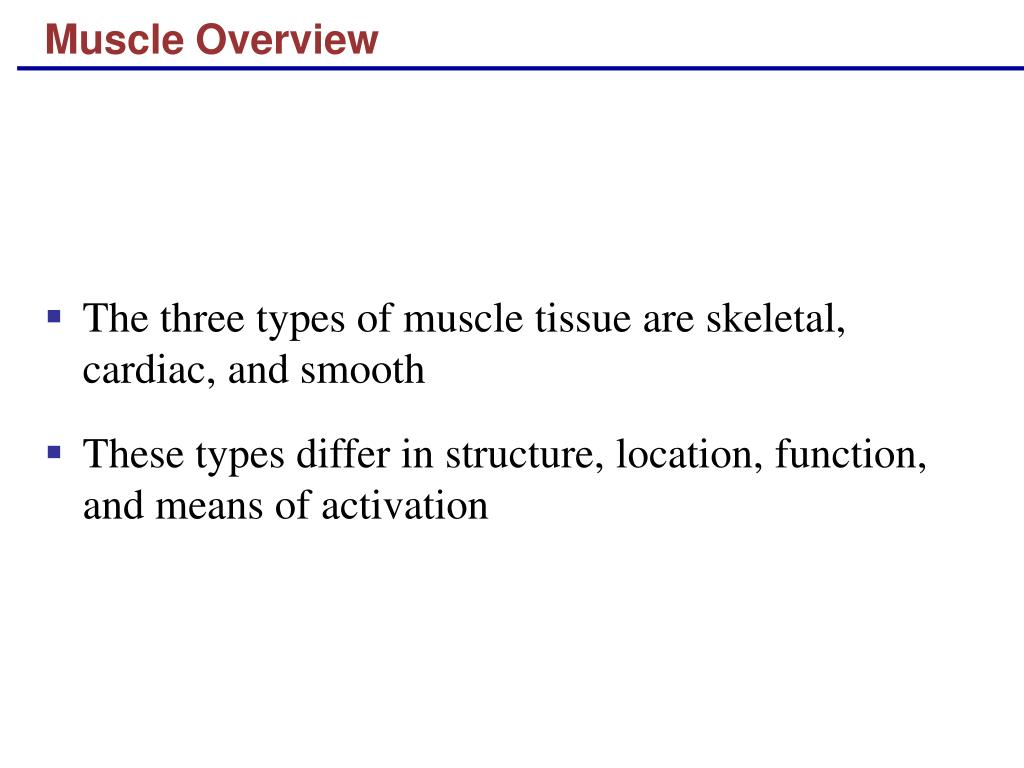 muscle overview l.