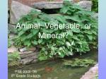 animal vegetable or mineral