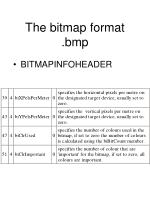 the bitmap format bmp20