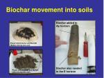 biochar movement into soils